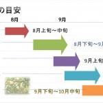 梨収穫時期の目安